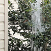 Ice Sculpture in the Holly Tree Below Dripping Gutter