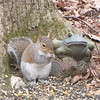 Squirrel with a Frog Body Guard