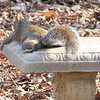Our Squirrels Know How to Relax