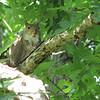 Squirrel With a Pretty Pose