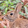 Closeup of Our First Spring Bunny - Seems to have fur missing around the nose