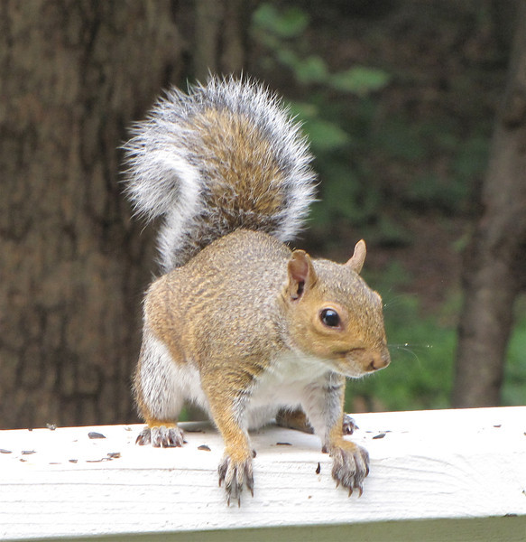 One of The Baby Squirrels Born This Year<br /> There were a trio of little hyper balls of fur that just loved to play.