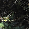 Closeup of Spider in Web