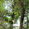 Looking Skyward with Spider in Web - A Masterpiece of God