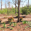 Early Spring Front Yard - April 6