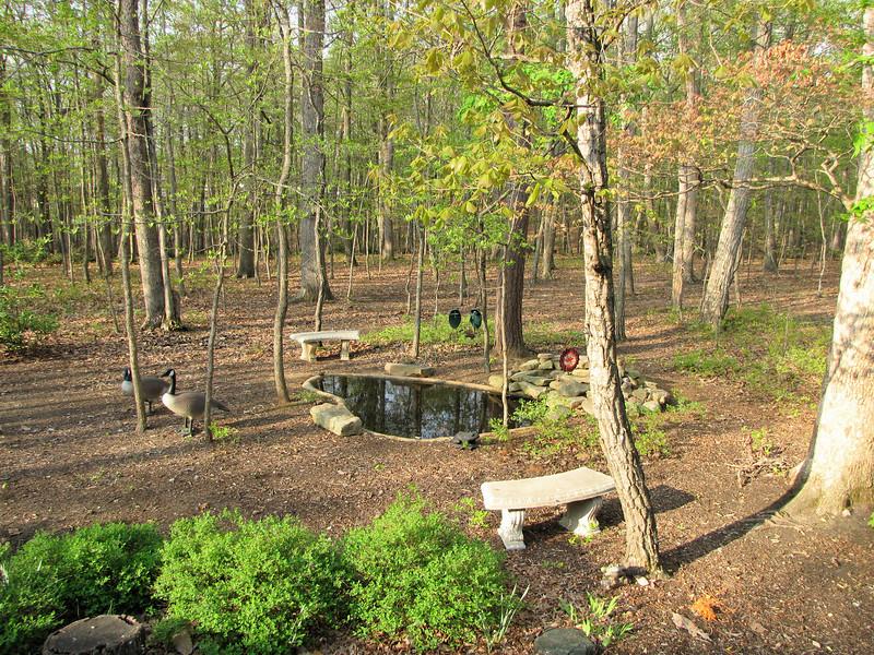 Backyard in Early Spring  4-20-11