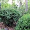 Snowmound Spirea (Spiraea nipponica 'Snowmound') Beginning To Bloom Today  4-30-11