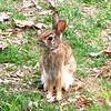 Precious Bunny Rabbit at Breakfast Window