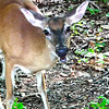 Sweet Looking Deer - Precious Visitors to Our  Habitat