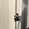 Bee Snuggled Up on Window Frame Waiting for Morning Sun to Warm Him Up