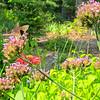 Butterfly on Upright Verbena - Left Side