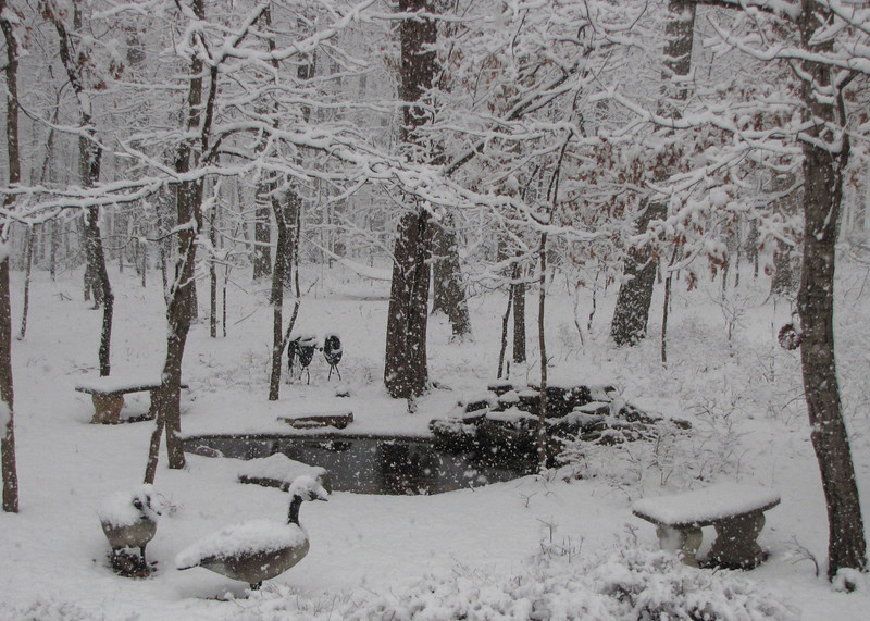 Backyard Ppnd With Snow Falliing Fast  2-19-12