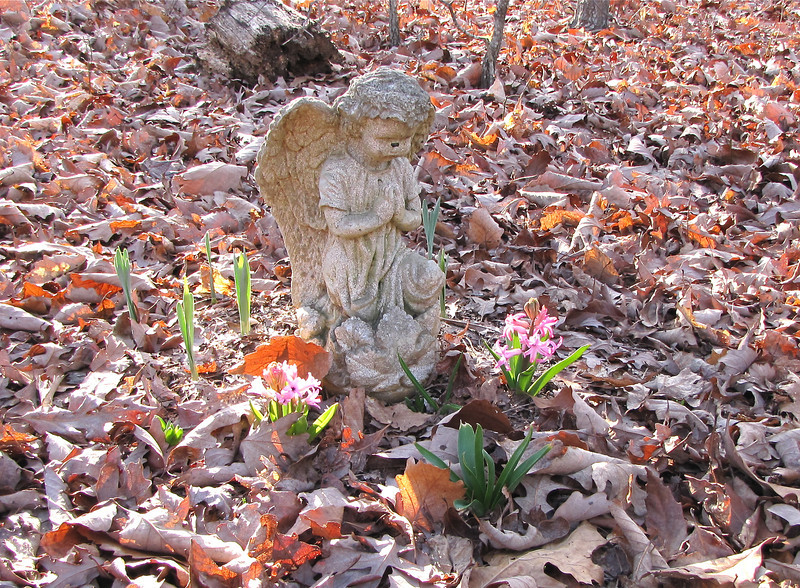 Wood Hyacinths Were Blooming End of January on Skipper's Grave