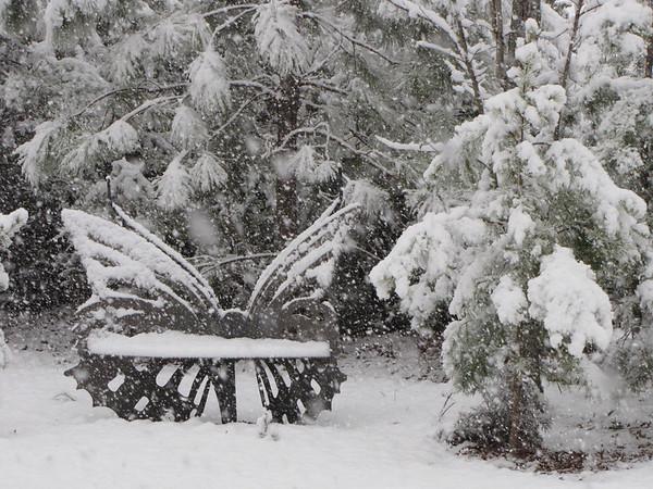 2012 Garden at Bluebird Cove