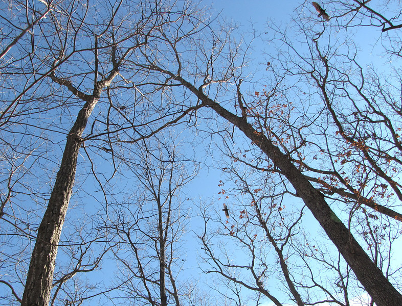 Hammock View of Winter Sky with Vulture