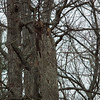 Owl In A Tree?<br /> No, it wasn't when I got the binoculars, but the broken off dead tree seems to have something with a face.  I didn't realize I got a photo of a red-headed woodpecker on the limb below until I had downloaded the photos.