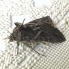 Moth Has Very Unusual Features