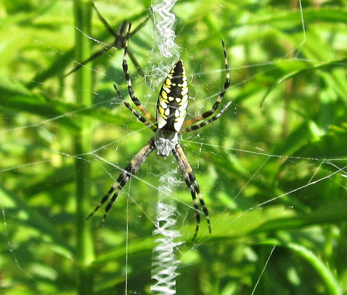 Garden Spider With Zipper Center