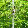 Garden Spider With Zipper Center