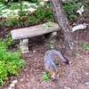Gray Fox, A Welcomed Visitor