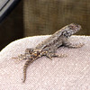 Eastern Fence Lizard on Loveseat on Deck - Seems To Think It's His Domain For Weeks Now