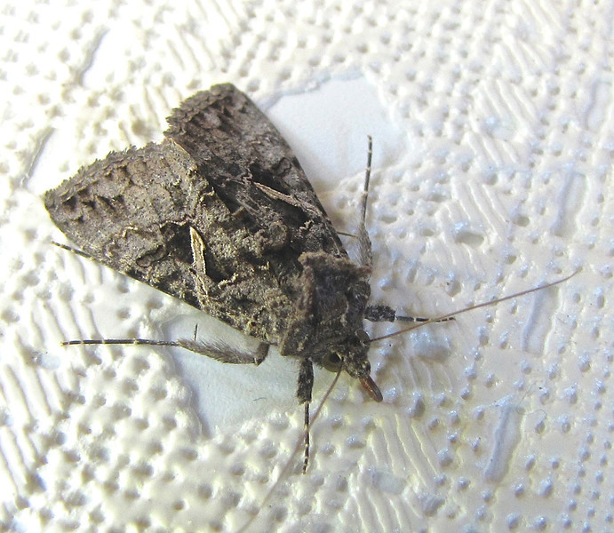 Moth Found on Chair Brought in From Outside Cold