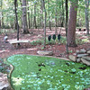 Pond with Duckweed and Water Lettuce<br /> Great combination to keep algae under control, although Duckweed is an invasive.  Water Lettuce keeps it in check, but this year we had cold weather into June and then mild days so the Water Lettuce didn't multiply as usual.