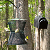 American Goldfinches on Feeder with Squirrel in Flight Tower