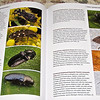 "My Published Beetle - Pg. 187, Bottom Right Photo - ""Beetles of Eastern North America"""