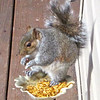 Our Cute Dried Mealworm-Eating Squirrel