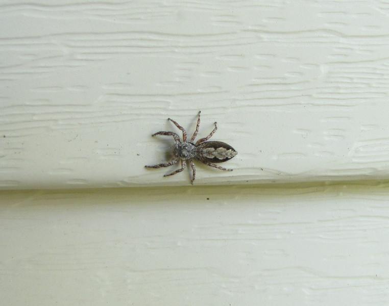 Pretty Spider on Front Porch