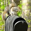 Squirrels Are Waiting For The Peanut Sweepstakes Winnings to Arrive