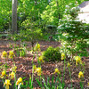 Irises and Snowflake Viburnum