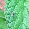 Tiny Wasp on Leaf