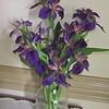 Purple Irises - Plants From Nora