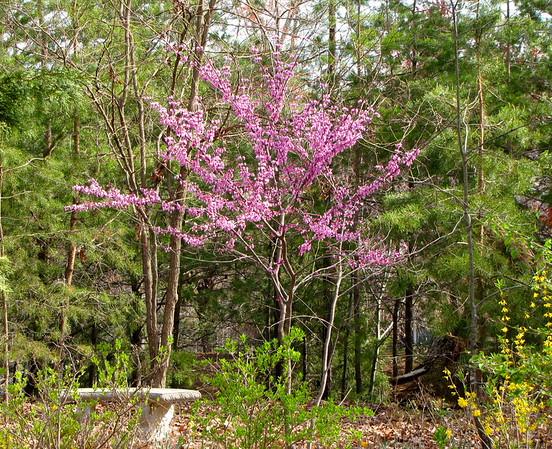 2015 Garden at Bluebird Cove