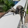 Wolf Spider 9-20-10 - Ken Bushell's Photo