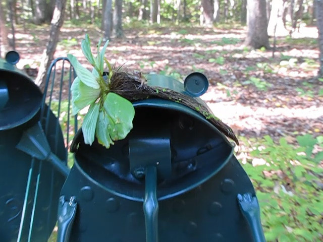 VIDEO:  Frog Release 13 On Frog Garden Art in Back Woods  10-7-10