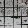 View Through Kitchen Window