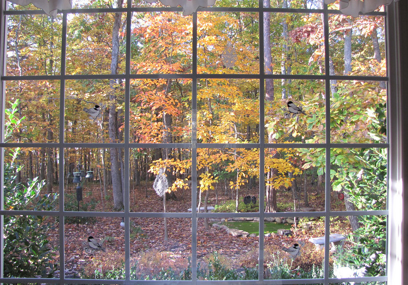 Kitchen View of Autumn Colors  10-25-09