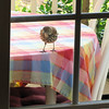 Let Me In, Whee-ooh - Brown Thrasher