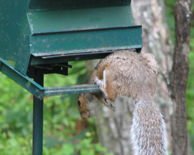 Hey God, The Other Squirrels Are Laughing At Me
