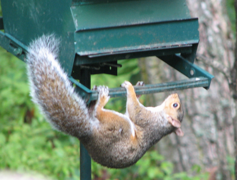There's Gotta Be A Way Into This Squirrel-Proof Feeder