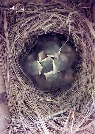 Babies are 5 days old