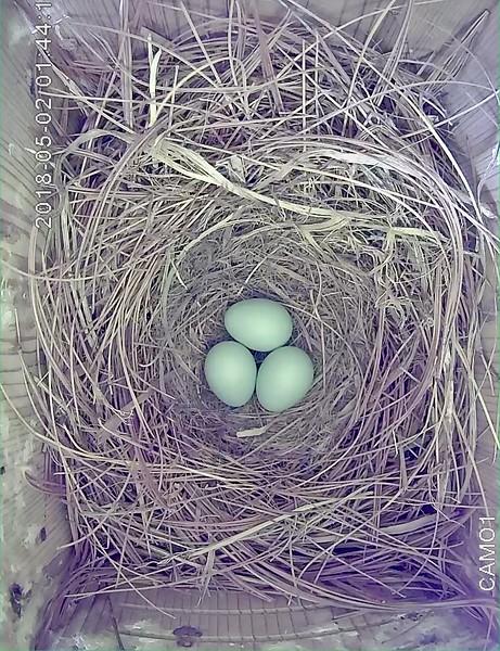 May 25, egg 3