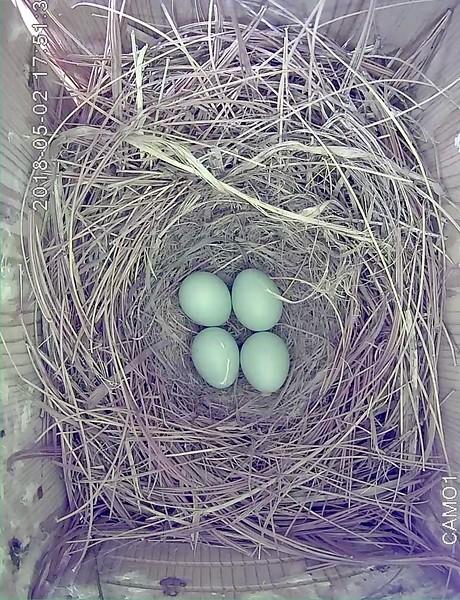 May 26, egg #4