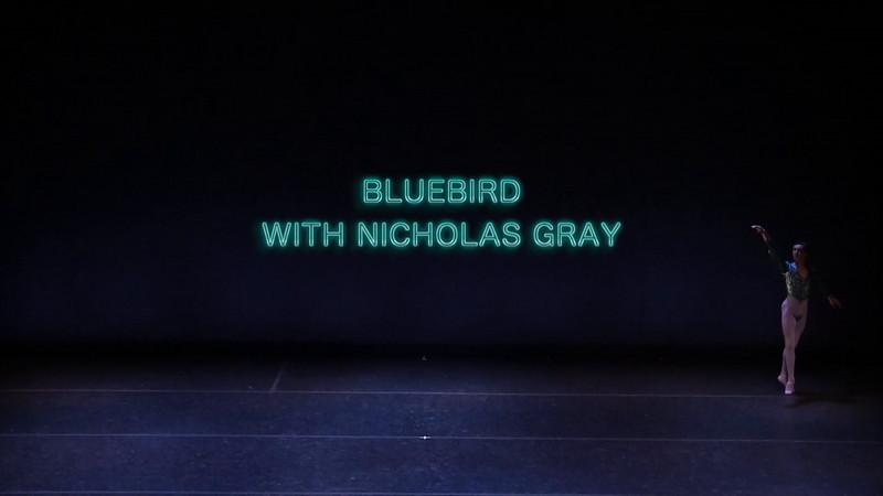 Bluebird with Nicholas Gray