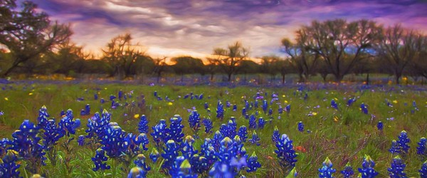Sunrise In Bluebonnets