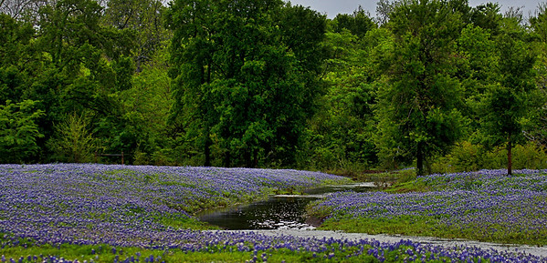 Bluebonnet Stream