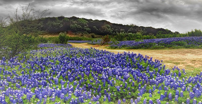 Storm Over Bluebonnets
